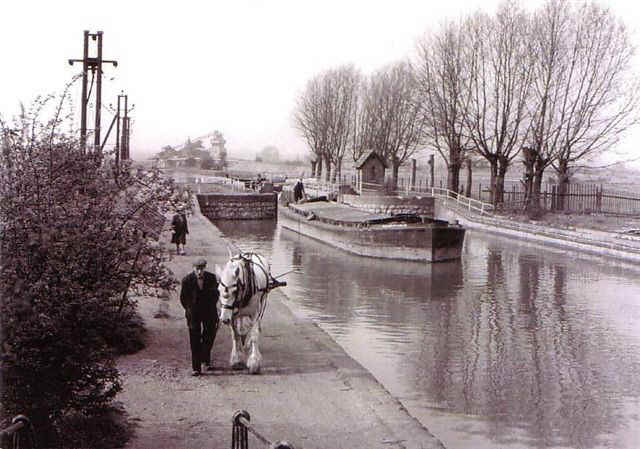 The last horse-drawn barge on the River Lea - in 1955 near Waltham Abbey